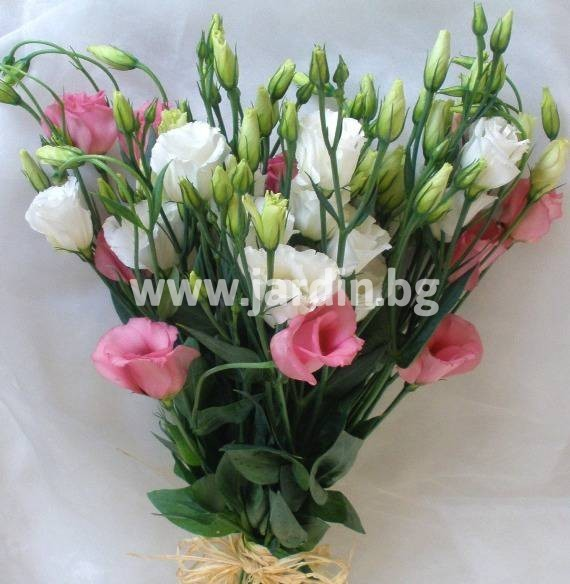 57-delivery-to-bourgas-delivery-bouquet (2) – Копие