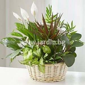 Potted Plants №1