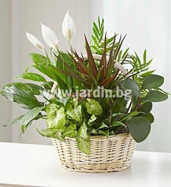 2.Кошница Саксийни цветя