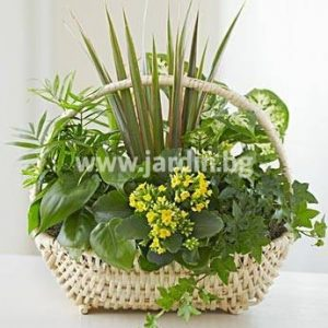 Potted Plants №2