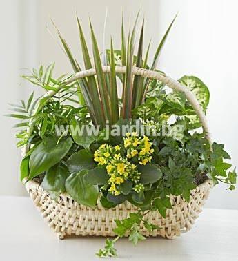 3. Кошница Саксийни цветя