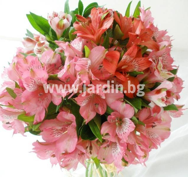 на цветя алстромерия (2)