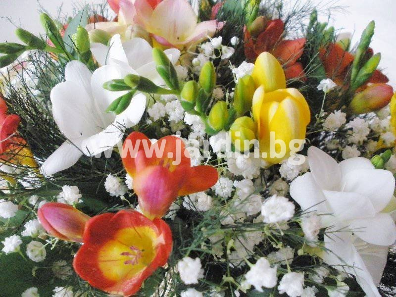 _цветов_болгариа (38)