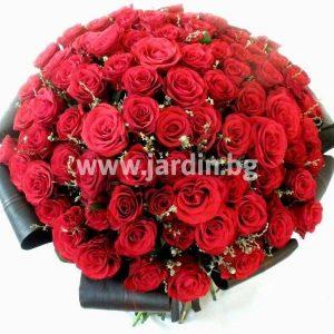 """101 roses """"Captivatingly"""""""