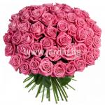101 розови рози