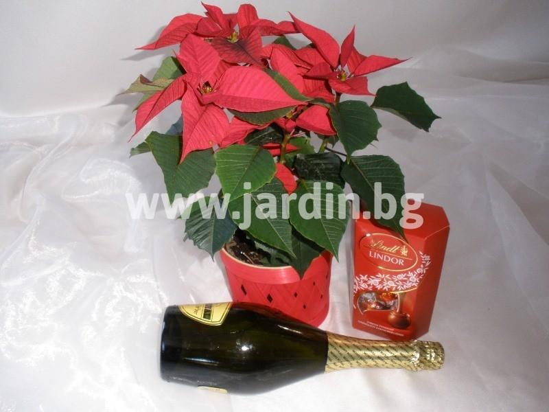 Christmas-bouquet-1 (17)