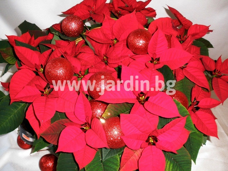 Christmas-bouquet-1 (46)