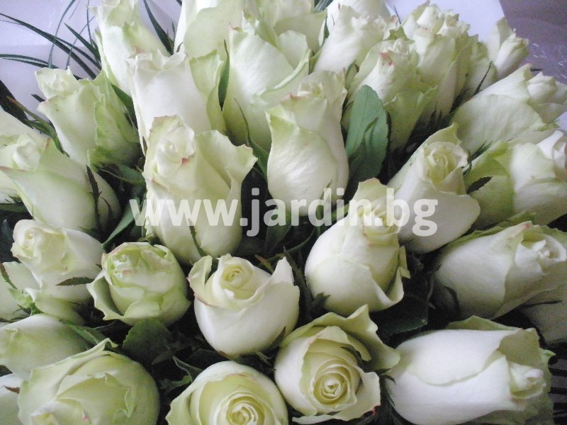 delivery-flowers-bulgaria (5)