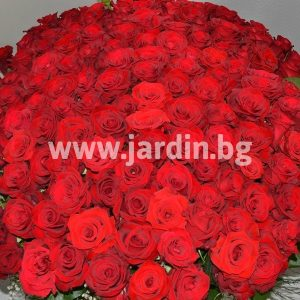 "Basket "" 175 red roses"""