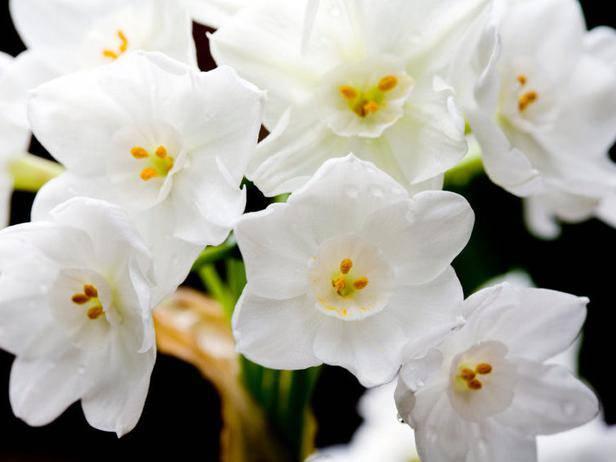 Направете си цъфтяща пролетна градина вкъщи