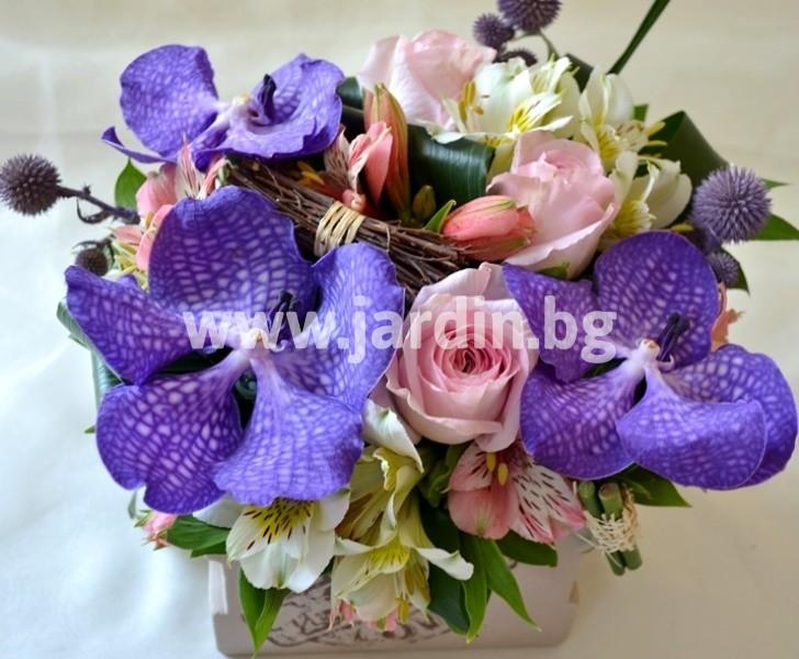 arrangement_vanda (1)