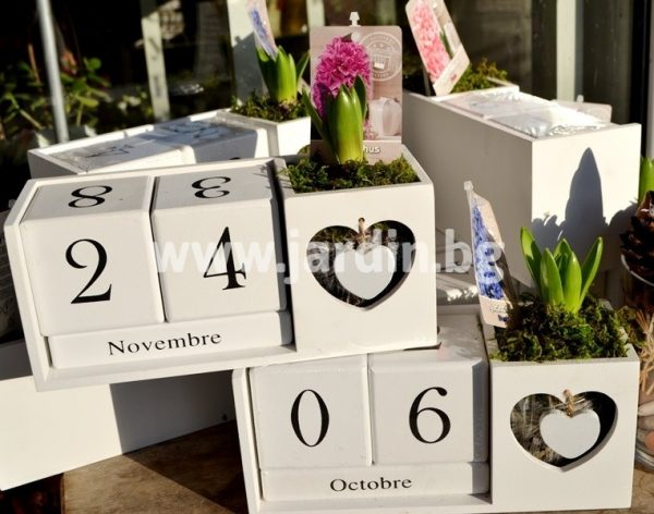 Вечен Календар и цвете