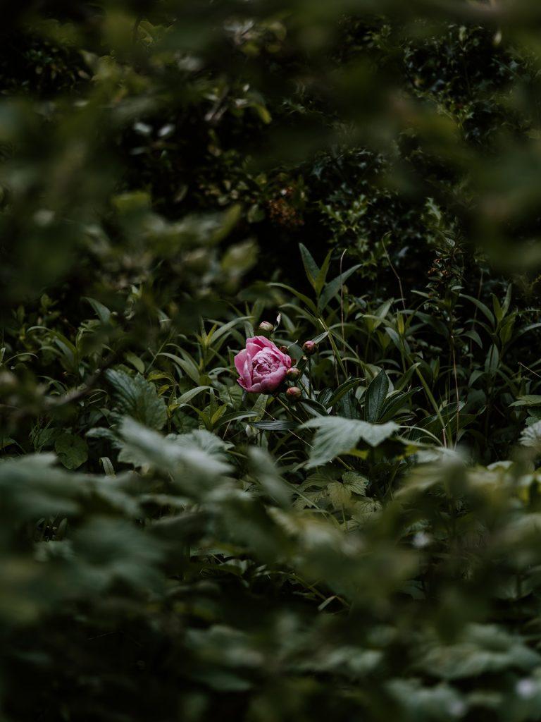 Жардин бутик за цветя
