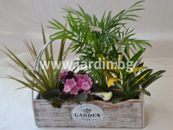Саксийни цветя Градина