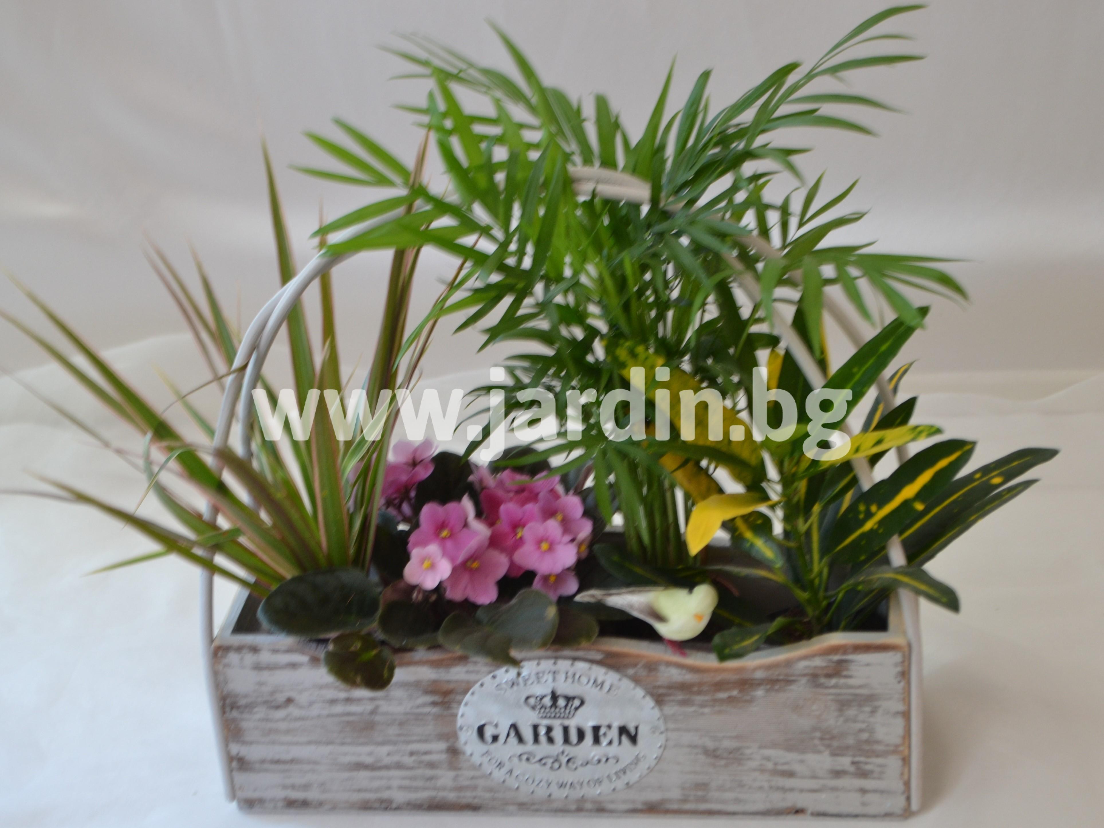 саксийни-цветя (1)