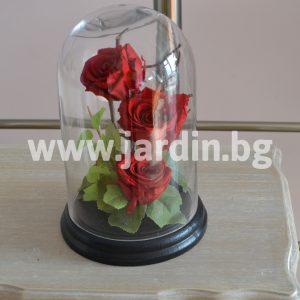 Вечни рози №1