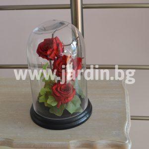 Eternal roses №1