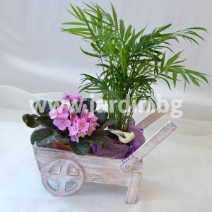 Small Potted Flowers №3