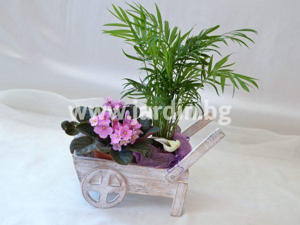 Малки Саксийни Цветя №3