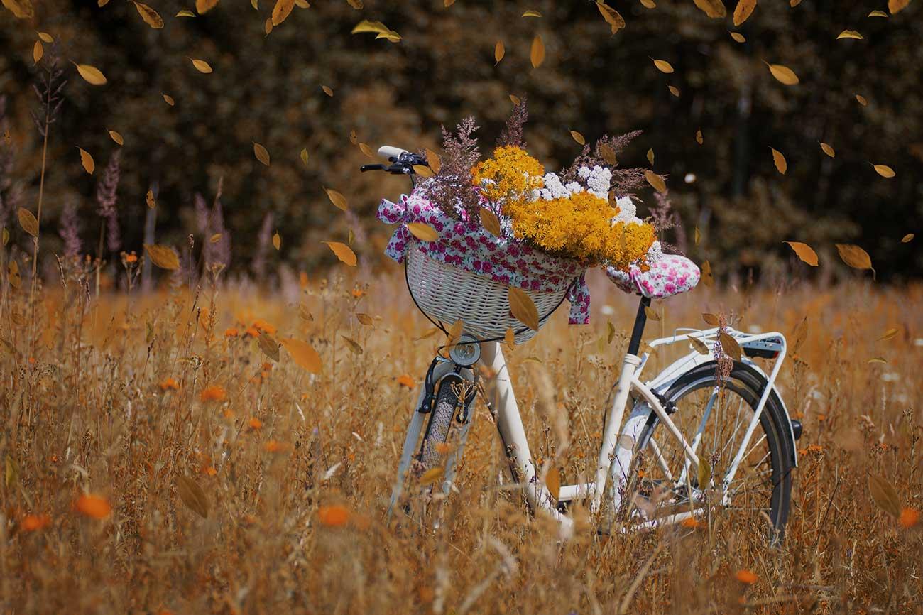 Jardin-flowers